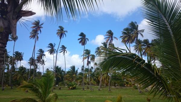 https://www.kiswum.com/wp-content/uploads/LG_27UD/DominicaanseRepubliek-Small.jpg
